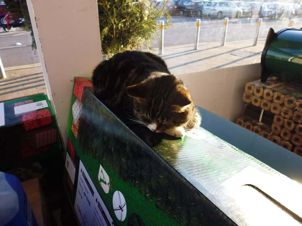 Mango - Tiverton's Tesco cat (he even has his own Facebook page)
