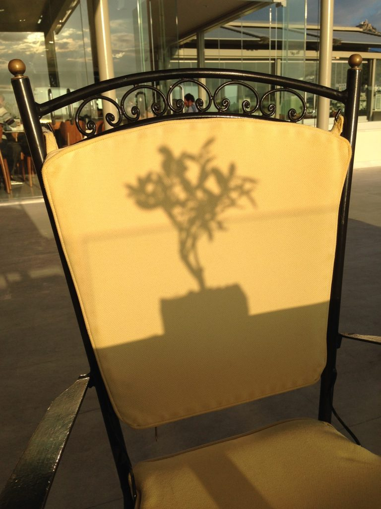 Great shot of the shadow of an olive tree at the Olive Garden - Titania Hotel