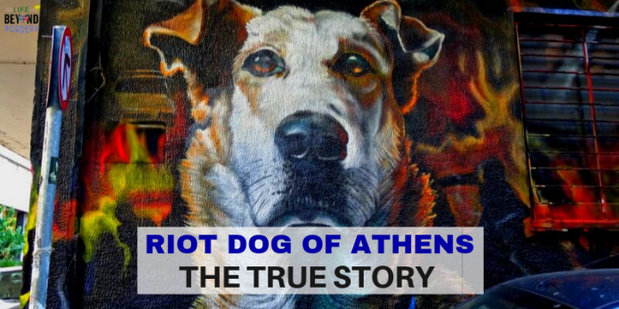 Riot Dog of Athens - the true story - LifeBeyondBorders