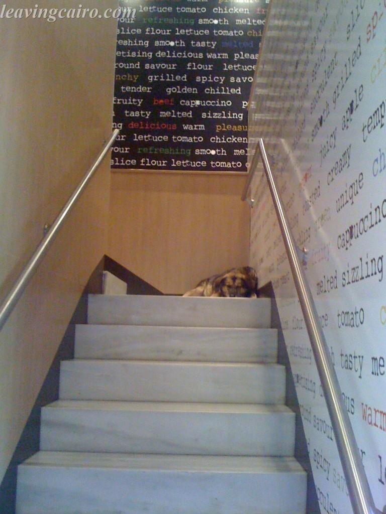 Riot Dog sleeping in McDonalds Athens, Greece - LifeBeyondBorders
