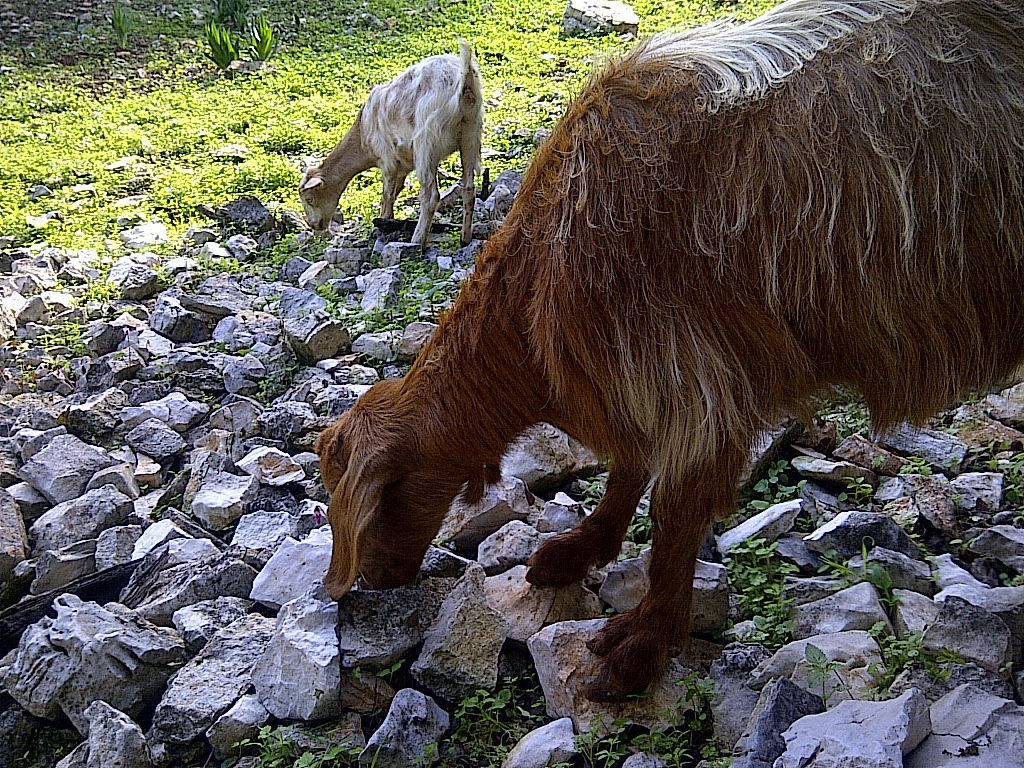 The locals on Kefalonia ;0)
