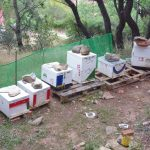 Beekeeping in Athens
