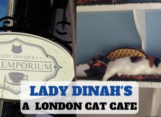 Cat Cafe - London - Lady Dinah's - LifeBeyondBorders