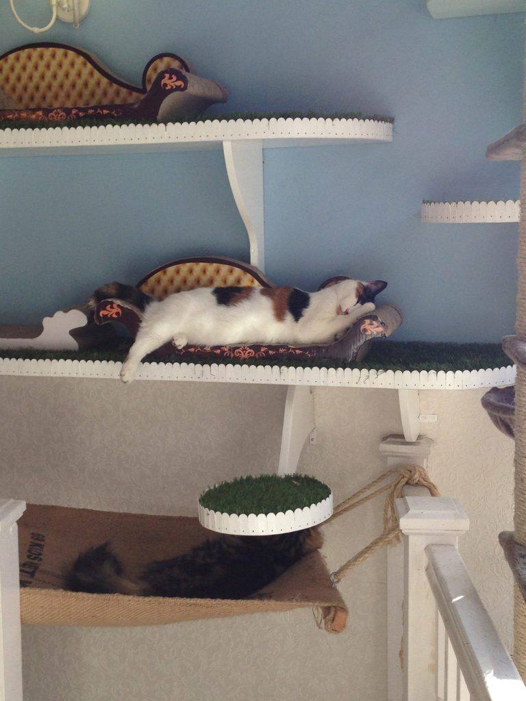 I love my bed at Lady Dinah's Cat Cafe, London