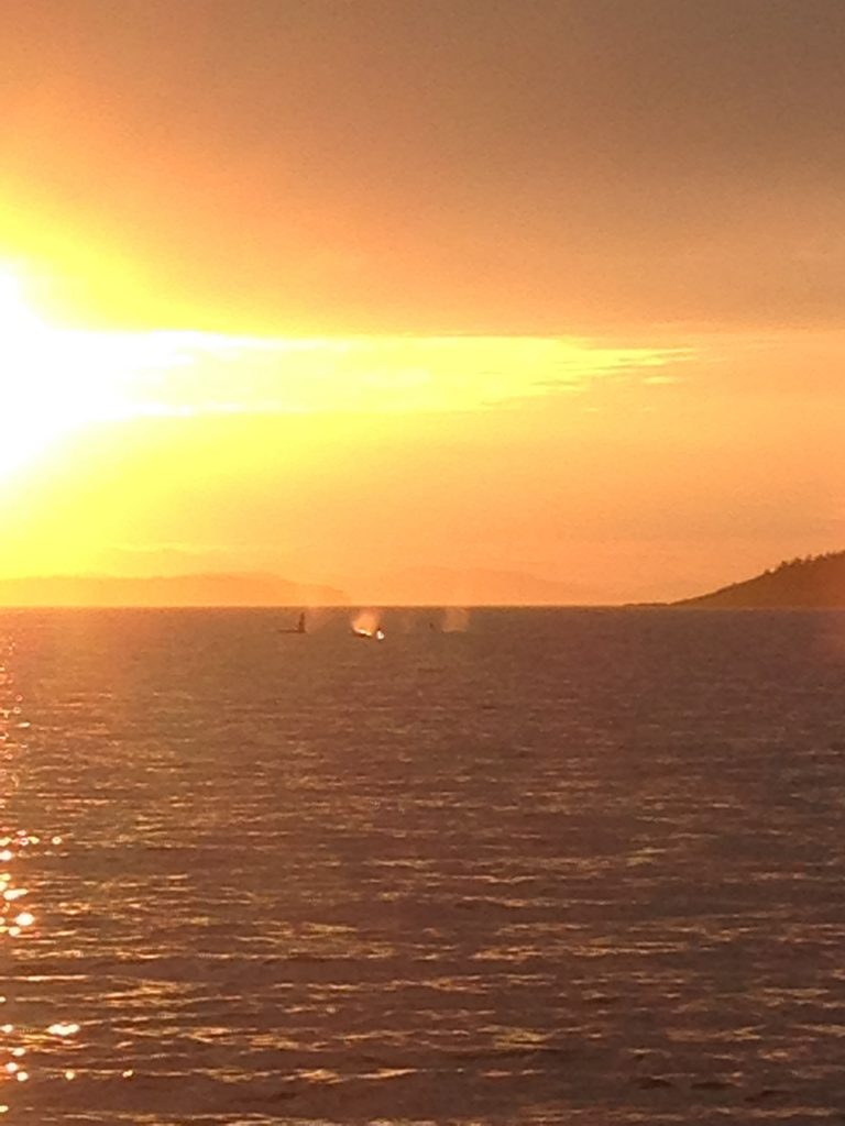 This awesome shot was taken when whale watching off San Juan Island at sunset