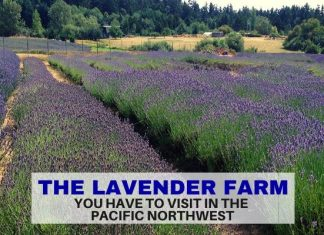 Lavender Farm on San Juan island - Pacific Northwest - LifeBeyondBorders