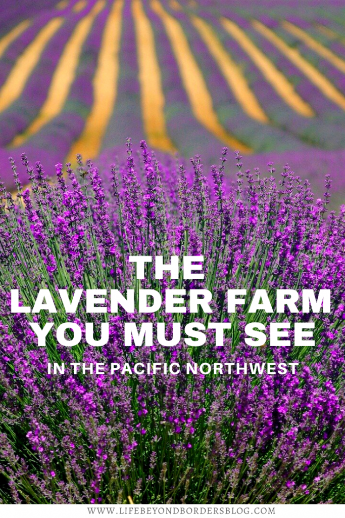 Lavender Farm on San Juan islands - Seattle - LifeBeyondBorders