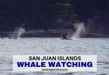 Whale Watching San Juan Islands - LifeBeyondBorders