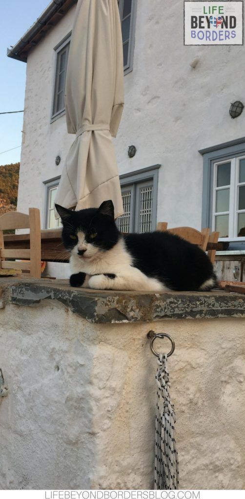 BellyPop the Cat at Nicaela's House - Hydra island - Greece. Life Beyond Borders