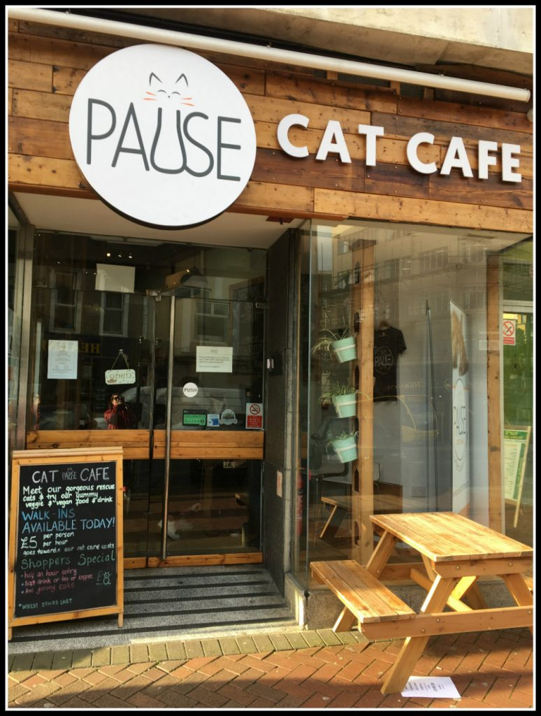 Pause Cat Cafe - Bournemouth, Dorset, UK - LifeBeyondBorders