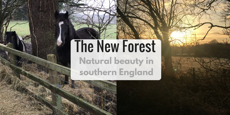 The New Forest - Natural Beauty in southern England - LifeBeyondBorders