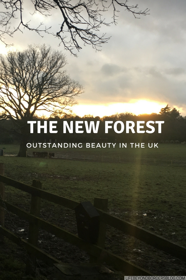 the New Forest in the UK offers breathtaking scenery across heathland and forests. LifeBeyondBorders