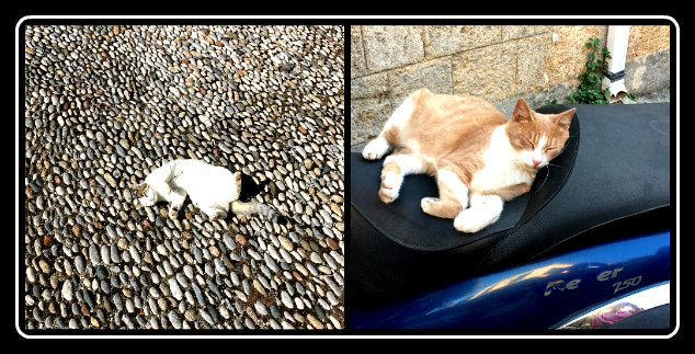 Cats chilling on Rhodes island, Greece - LifeBeyondBorders