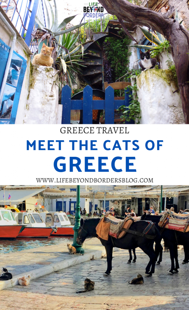 Meet the cats of Greece - LifeBeyondBorders