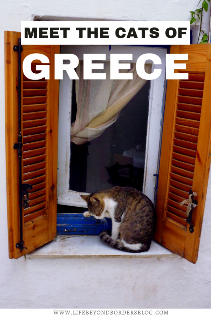The Cats of Greece - LifeBeyondBorders
