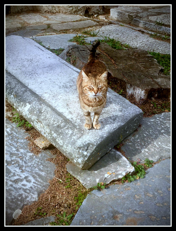 Monastery cat on hike in Hymettus Mountain - Athens - Greece - LifeBeyondBorders